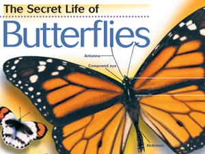 The Secret Life of Butterflies